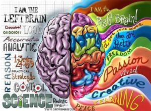 Linkerhersenhelft en rechterhersenhelft. Beelddenkers hebben een sterk ontwikkelde rechterhersenhelft. De rechterbrein is sterk visueel holistisch ingesteld